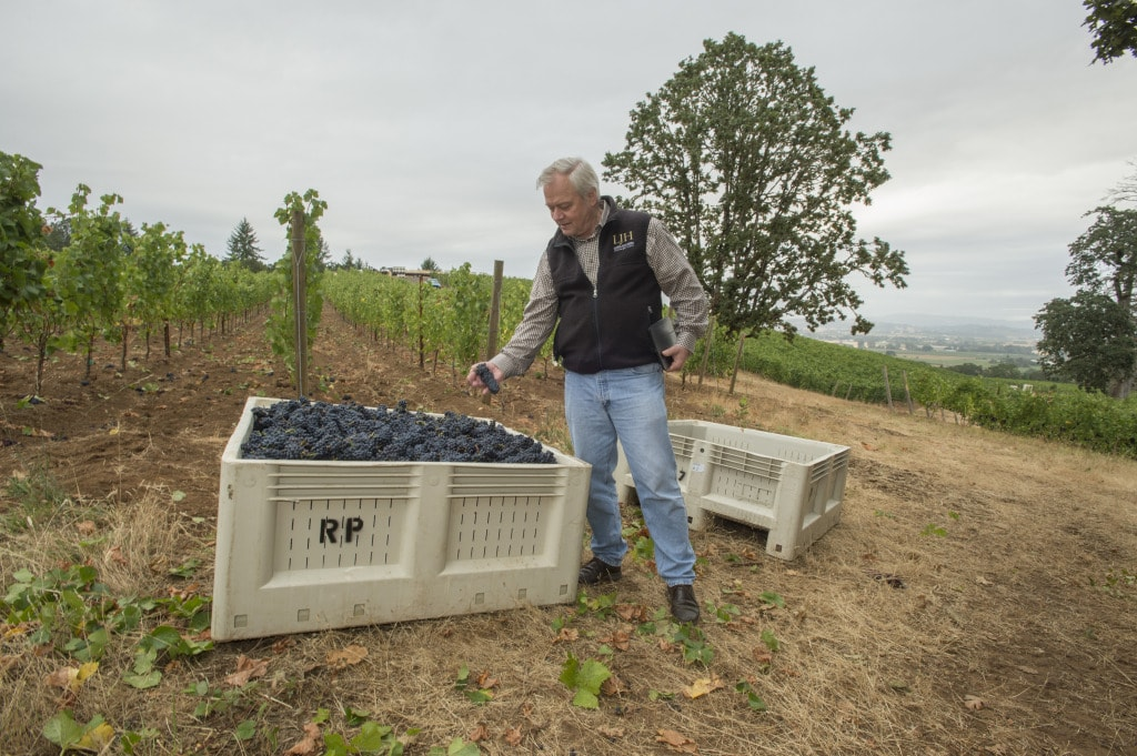 Terry Family WInes, Harvest 2015, Yamhill Carlton AVA, Willamette Valley, Oregon